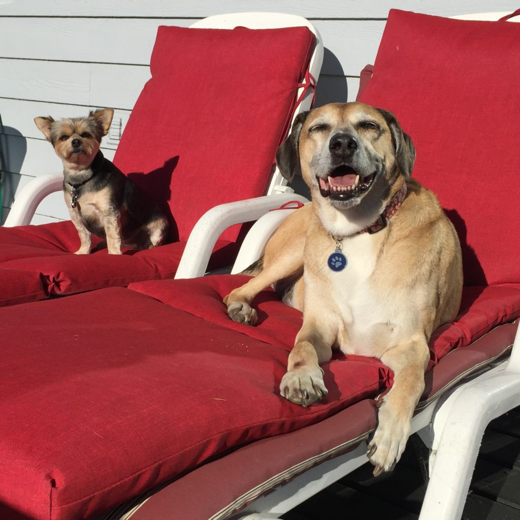 Colby and friends enjoy the best in home dog sitting
